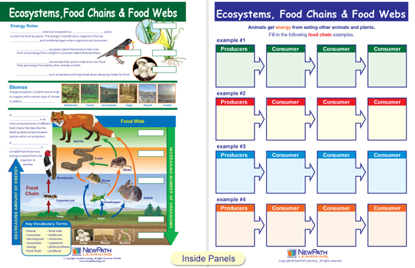 Ecosystems, Food Chains & Food Webs (Science Visual Learning Guides)