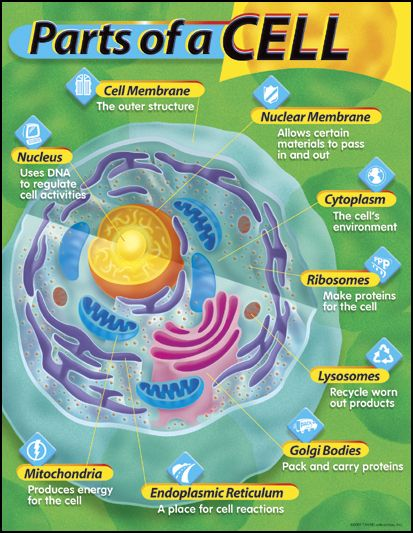 Parts of a Cell Learning Chart
