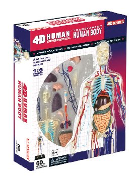 4D Transparent Human Body Anatomy Model