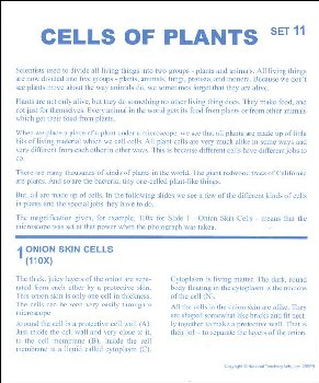 Cells of Plants Microslide Lesson Set