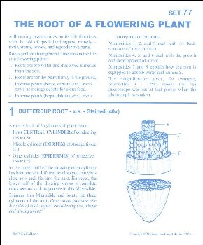 Root of A Flowering Plant Microslide Lesson Set