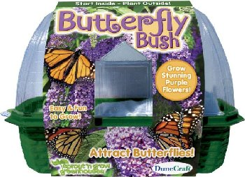 Butterfly Bush (Sprout 'n Grow Greenhouse)