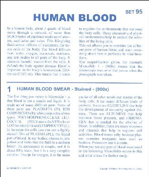 Human Blood Microslide Lesson Set