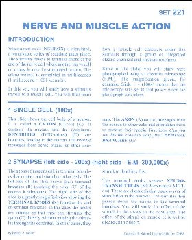 Nerve and Muscle Action Microslide Lesson Set