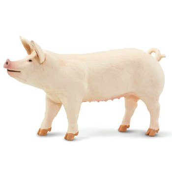Large White Pig (Safari Farm)