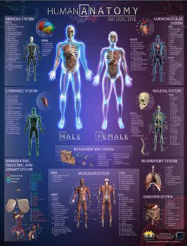 Human Anatomy Smart Chart (Small)