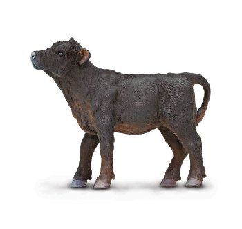 Black Angus Calf (Safari Farm)