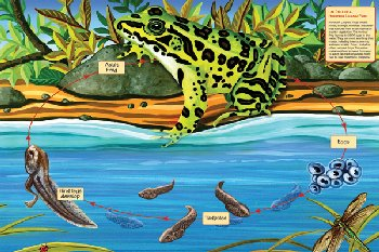 Life Cycle of a Leopard Frog Floor Puzzle