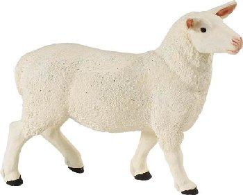 Ewe (Safari Farm)