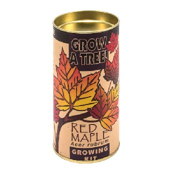 Red Maple Grow-A-Tree Kit