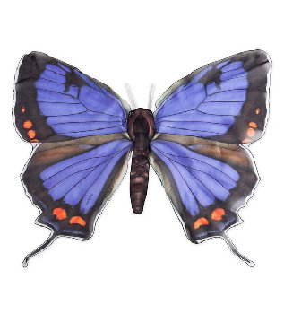 Realistic Butterfly Wings - Colorado Hairstreak