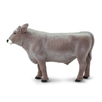 Brown Swiss Bull (Safari Farm)