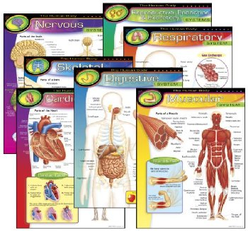 Human Body Learning Charts (7 Charts)