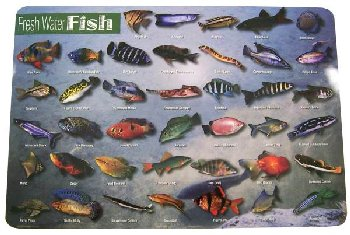 Fresh Water Fish Placemat