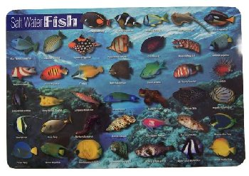 Salt Water Fish Placemat