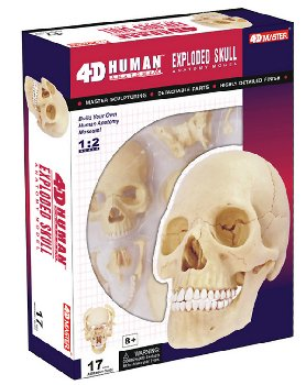 4D Vision Human Anatomy Exploded Skull Model