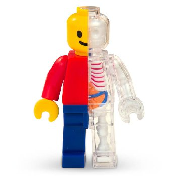 4D Vision Brick Man Anatomy Model