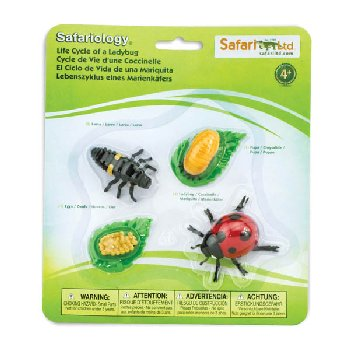 Life Cycle of a Ladybug (Safariology)