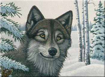 Painting By Numbers - Snow Wolf (Junior Large)