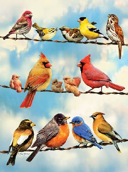 Birds on a Wire Puzzle (500 Pieces)