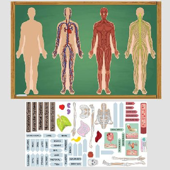 Human Body Mini Play Set (Peel, Play & Learn)