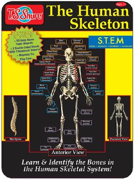 Human Skeleton Magnetic Science Tin