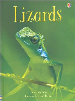 Lizards (Usborne Beginners)